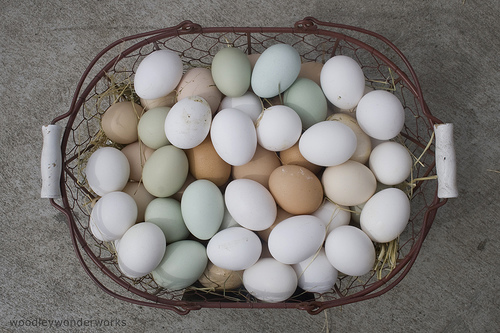 Multi Colored Chicken Eggs